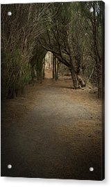 Through The Woods Acrylic Print by Robert Martin