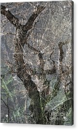 Acrylic Print featuring the photograph Thru Rain by Lee Craig