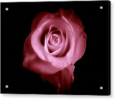 Acrylic Print featuring the photograph Thumbelina  by Micki Findlay