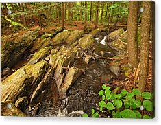 Thundering Brook Falls Vermont Acrylic Print