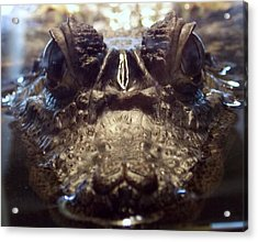 It's So Quiet, You Can Hear The Gators Breathing Acrylic Print