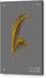 Tickle Feathers Acrylic Print by Tina M Wenger