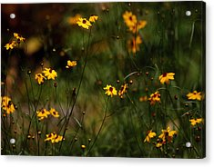Tickseed Forest Acrylic Print