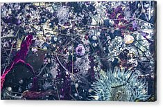 Acrylic Print featuring the mixed media Tidal Pool Assortment by Terry Rowe