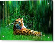 Tidy Tiger Strips Acrylic Print by Glenn Feron