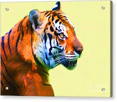 Tiger . 7d2058 . Painterly Acrylic Print by Wingsdomain Art and Photography
