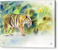 Tiger Acrylic Print by Amy Kirkpatrick