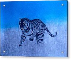 Tiger And Blue Sky Acrylic Print