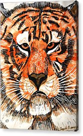 Tiger Acrylic Print by Angela Murray