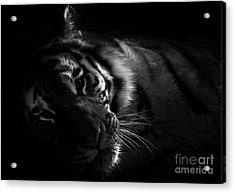 Tiger Beauty Acrylic Print