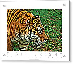 Acrylic Print featuring the photograph Tiger Bright  Naturally Rare Poster by David Davies