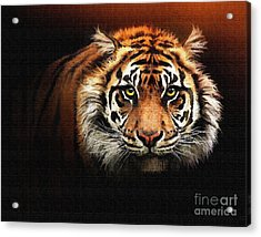 Tiger Bright Acrylic Print by Robert Foster