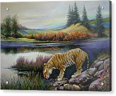Tiger By The River Acrylic Print by Svitozar Nenyuk