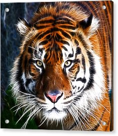 Tiger Close Up Acrylic Print