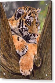Tiger Cub Painting Acrylic Print by David Stribbling