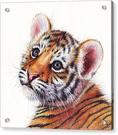 Tiger Cub Watercolor Painting Acrylic Print