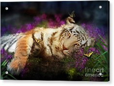 Tiger Dreams Acrylic Print by Aimee Stewart
