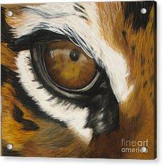 Tiger Eye Acrylic Print by Ann Marie Chaffin