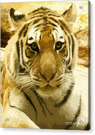 Acrylic Print featuring the digital art Tiger Eyes by Erika Weber