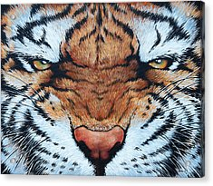 Tiger Eyes Acrylic Print
