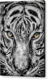 Tiger Eyes Acrylic Print by James Woody