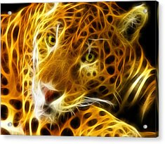 Tiger Face  Acrylic Print by Mark Ashkenazi