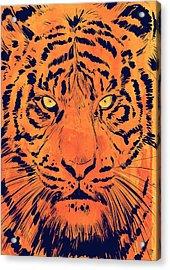 Tiger Acrylic Print by Giuseppe Cristiano