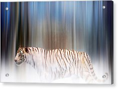 Tiger In The Mist Acrylic Print