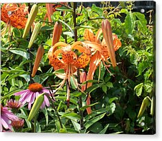 Tiger Lilies Acrylic Print by Catherine Gagne