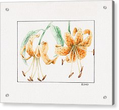 Acrylic Print featuring the painting Tiger Lilies by Rebecca Davis
