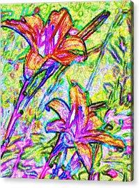 Tiger Lillies Acrylic Print by Ian  MacDonald
