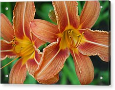 Tiger Lily 3 Acrylic Print by Jim Gillen