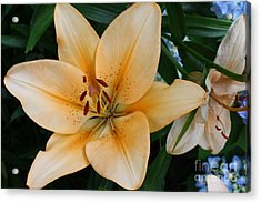 Acrylic Print featuring the photograph Tiger Lily by Dora Sofia Caputo Photographic Art and Design