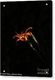 Tiger Lily On Black Acrylic Print