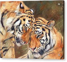 Tiger Love Acrylic Print by David Stribbling