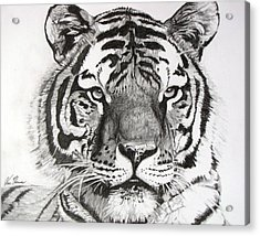 Acrylic Print featuring the drawing Tiger On Piece Of Paper by Kevin F Heuman