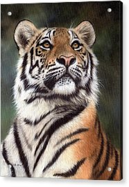Tiger Painting Acrylic Print by Rachel Stribbling