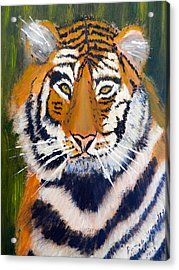 Tiger Acrylic Print by Pamela  Meredith