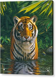 Tiger Pool Acrylic Print by MGL Studio - Chris Hiett