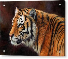 Tiger Portrait  Acrylic Print by David Stribbling