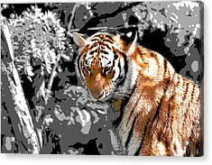 Tiger Poster Acrylic Print
