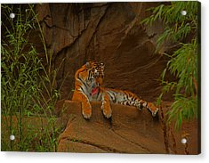 Acrylic Print featuring the photograph Tiger Resting by Andy Lawless