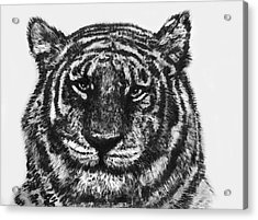 Acrylic Print featuring the painting Tiger by Shabnam Nassir