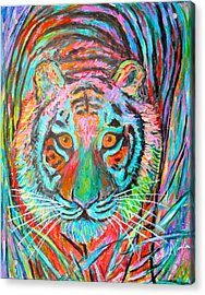 Tiger Stare Acrylic Print by Kendall Kessler