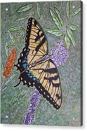 Tiger Swallowtail Butterfly Acrylic Print by Kathy Marrs Chandler