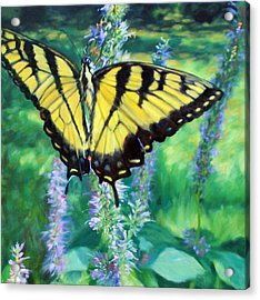 Tiger Swallowtail- Enjoying The Sweetness Acrylic Print by Bonnie Mason