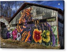 Tiger Tiger Acrylic Print by Daniel  Gundlach