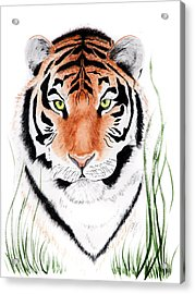 Tiger Tiger Where Acrylic Print