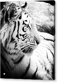 Acrylic Print featuring the photograph Tiger Watch by Erika Weber