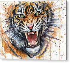 Tiger Watercolor Portrait Acrylic Print by Olga Shvartsur